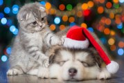 Bring A New Pet 'Home For The Pawlidays' And Have Your Picture Taken With Santa!