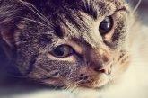 County, Cities, Volunteers & Austin Pets Alive! Partner To Help Save Area's Sick Felines