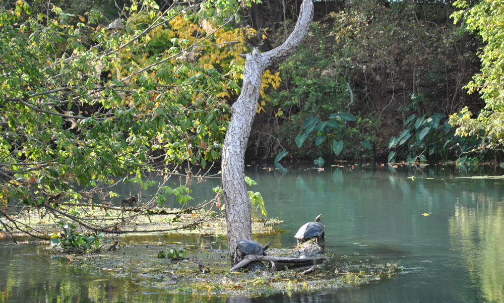 San Marcos Seeks Volunteers For Third Annual Fall River Cleanup