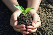 City Of Buda, Buda Public Library To Host Events In Honor Of Texas Arbor Day