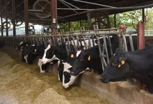 Photo of More than $7 Billion Paid In Second Round Of USDA Coronavirus Food Payments To Farmers