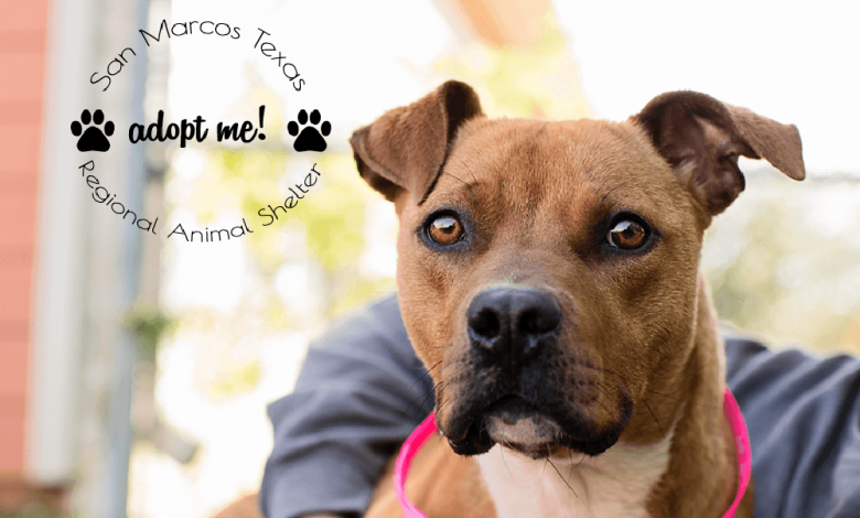 Photo of San Marcos Regional Animal Shelter 'Pets Of The Week'