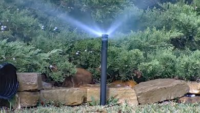 Photo of Prepare Your Sprinklers, Irrigation System For Spring