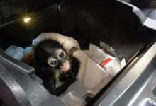 Photo of Weekly Texas Border Report: CBP Seize A Spider Monkey, $7M In Drugs, Arrest Convicted Murderer, Sex Offenders, Iranian Nationals